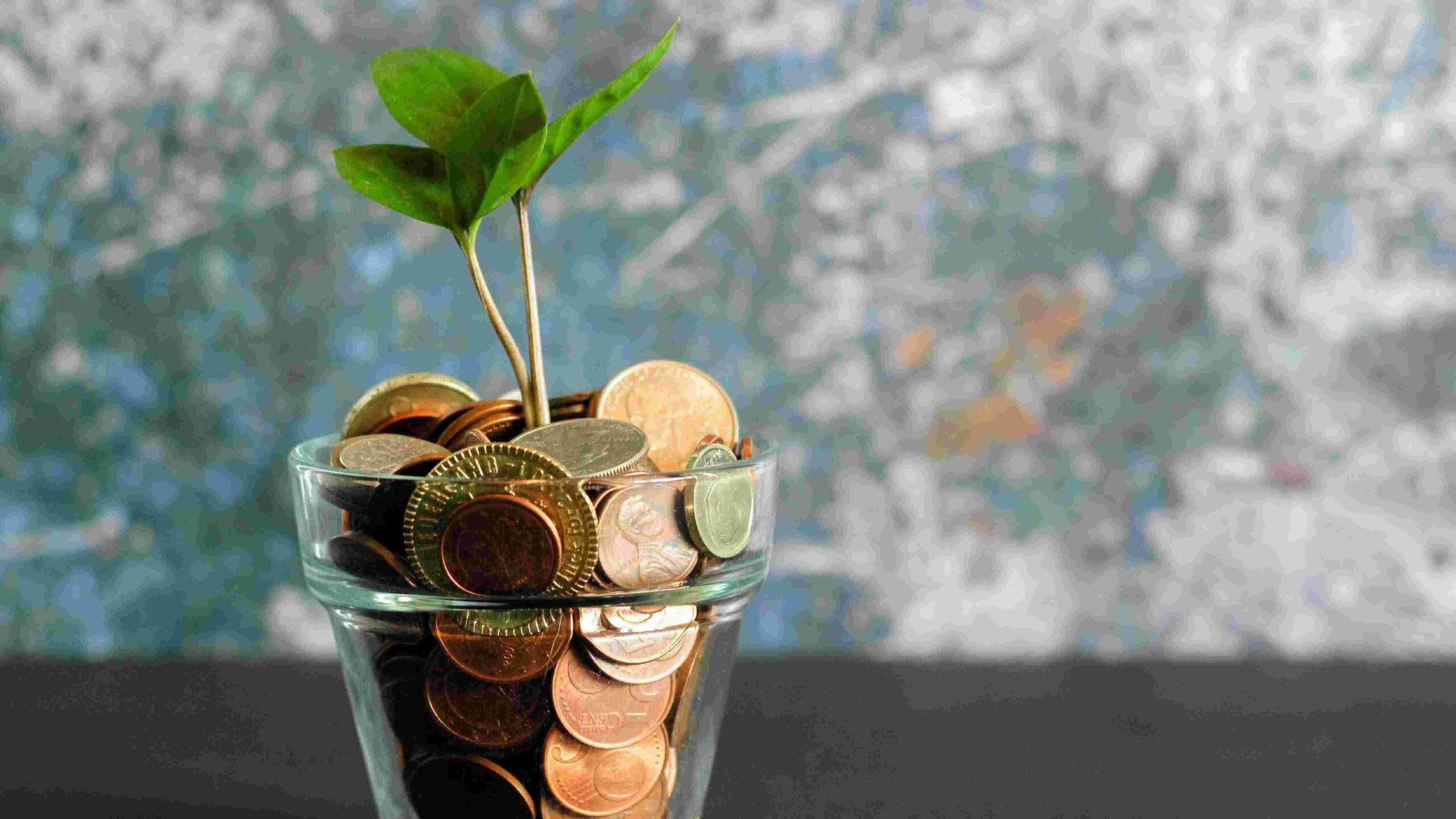 Financing & Using Umbrella Services